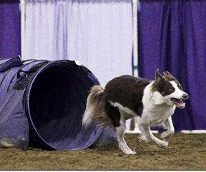 Dog Agility Training Logan